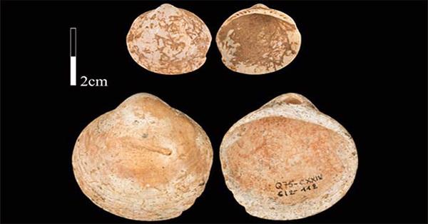 Con người đã biết đeo vòngcổ vỏ sò từ 120.000 năm trước