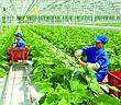 Tái cơ cấu và khoa học công nghệ: Hai giải pháp nền tảng của ngành nông nghiệp