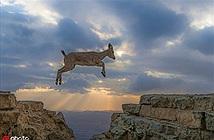 Ngoạn mục khoảnh khắc dê núi bay lượn trong ánh hoàng hôn