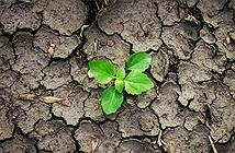 Mô hình toán học giúp chọn loại cây trồng để chống hạn