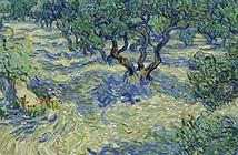 Xác châu chấu mắc kẹt 128 năm trong tranh Van Gogh