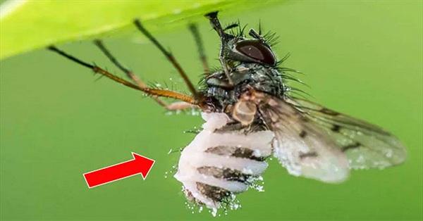 Sinh vật đáng sợ biến con mồi thành xác sống rồi ăn sạch nội tạng