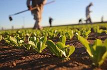 Ý tưởng siêu thực vật được trao giải Oscar khoa học trị giá 3 triệu USD