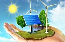 Năng lượng: Tắc kè hoa trong thế giới tự nhiên