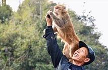 """Lạ lùng Vua khỉ, có hơn 200 """"đệ tử"""" khỉ nghe lời răm rắp"""
