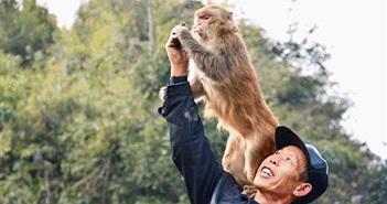 """Lạ lùng """"Vua khỉ"""", có hơn 200 """"đệ tử"""" khỉ nghe lời răm rắp"""