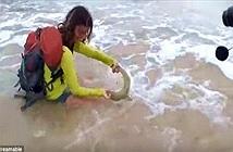 Lôi cá mập lê bờ Selfie, gái trẻ nhận cái kết đắng ngắt