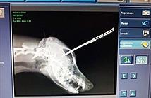 Chú chó trung thành bị dao găm vào đầu khi cương quyết bảo vệ chủ nhân