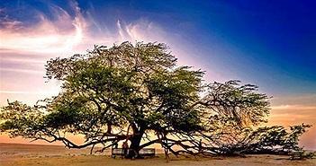 13 loài cây kì lạ bậc nhất trên Trái đất