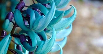 13 loài hoa hiếm và đẹp nhất thế giới