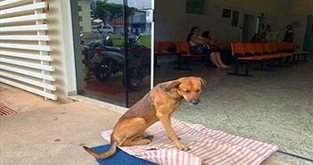 Xót xa chú chó túc trực ở bệnh viện chờ chủ nhân đã mất