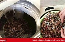 Tin mẹo rửa hải sản bằng máy giặt trên TikTok, cặp vợ chồng gây ra cái chết thương tâm cho 2,5kg tôm hùm đất