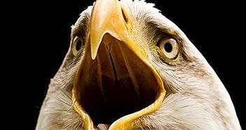 Tại sao các loài chim lại không có răng?