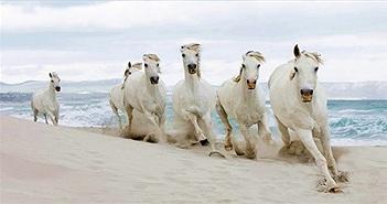 Những con ngựa nổi tiếng trong lịch sử Việt Nam