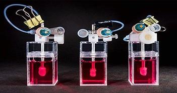 Những trái tim mini được nuôi như trồng cây ở Hồng Kông và tương lai của ngành dược phẩm