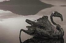 Bí ẩn hồ tử thần Natron làm sinh vật biến thành tượng sống