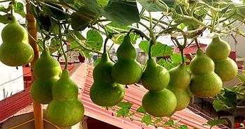 Một số loại rau quả càng đắng càng độc, tuyệt đối không được ăn