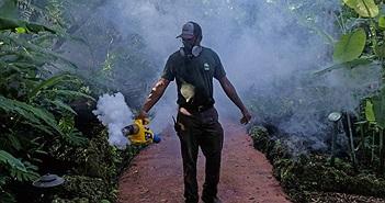 FDA cho phép dùng muỗi biến đổi gene để chống dịch Zika tại Mỹ