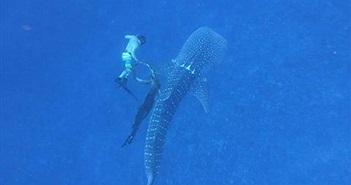 Cận cảnh giải cứu cá mập voi bị dây thừng thắt cổ