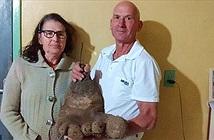 Củ khoai tây khổng lồ giống hệt bàn chân người