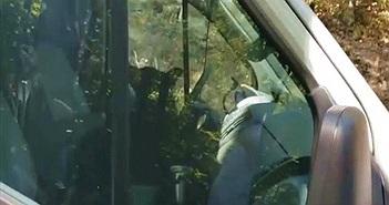 Nghe tiếng còi inh ỏi từ xe của mình, tài xế sửng sốt khi thấy kẻ đột nhập