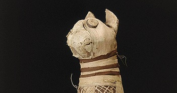 Khoa học chụp CT xác ướp mèo nghìn tuổi, phát hiện chấn động