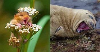 20 bức ảnh lọt vào chung kết cuộc thi khoảnh khắc hài hước của động vật hoang dã 2017
