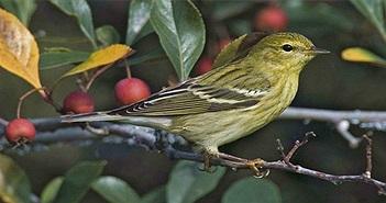 """Hai loài chim có khả năng siêu """"dị"""": Ăn gấp đôi trọng lượng cơ thể và lý do là..."""