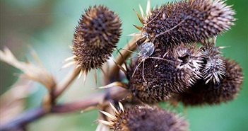 Vườn cây như thế nào sẽ thu hút được nhiều côn trùng?