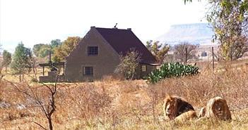 Hãi hùng sống giữa nhà bị 77 con sư tử vây quanh