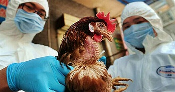 Virus H5N6 lây từ gia cầm sang người