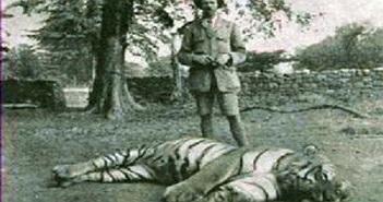 """Tiêu diệt hổ cái """"sát thủ"""" từng đoạt mạng hơn 430 người"""