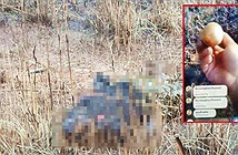 Đi săn chim trĩ, thanh niên nhặt được thứ chết người, còn dại...