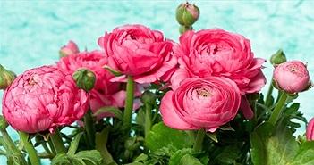 Hoa mao lương là gì? Ý nghĩa của hoa mao lương