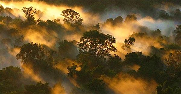 Rừng nhiệt đới đang mất dần khả năng hấp thụ carbon