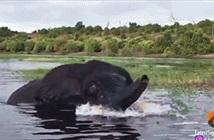 Kinh hoàng voi nổi điên, tiếp cận thuyền để tấn công