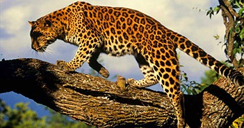 Những loài động vật hiếm nhất thế giới được bảo tồn thành công