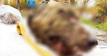 Đầu sói còn nguyên bộ não 4000 năm tuổi khiến chuyên gia sững sờ