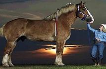 Những kỷ lục trong thế giới loài ngựa