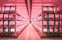 Nông trại công nghệ cao của Trung Quốc: Sản lượng 10 tấn/ngày, chỉ cần 4 nhân viên