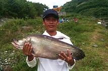 Quảng Nam: Bắt được cá thác lác khủng nặng hơn 7kg
