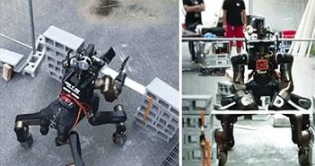 Nhiệm vụ cứu hộ có thể không còn do con người đảm nhiệm nữa mà là robot nhân mã biết karate này đây