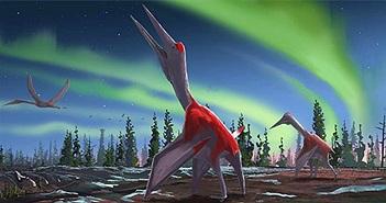 Phát hiện hoá thạch loài động vật biết bay lớn nhất từng sống trên Trái đất
