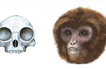 Phát hiện tổ tiên sớm nhất của vượn hiện đại
