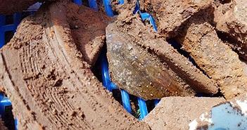 Phát hiện nền đất lạ ở khu vực khảo cổ tìm mộ vua Quang Trung