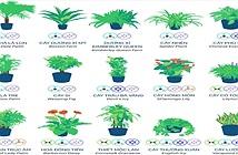 Đây là những cây mà NASA khuyên bạn nên trồng trong nhà