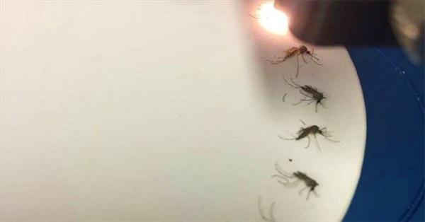 Thiết bị hồng ngoại phát hiện muỗi nhiễm virus Zika