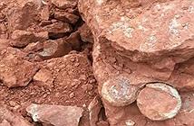 Trung Quốc: Đào đất xây dựng, phát hiện hàng loạt trứng khủng long 145 triệu năm