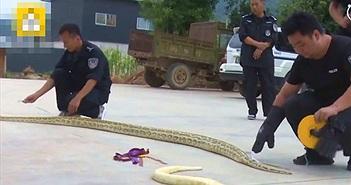 """Mua rắn nhỏ làm thú cưng, chủ nhân tá hỏa khi rắn """"biến hóa""""..."""