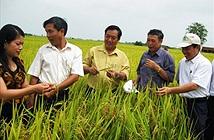 Cha đẻ những giống siêu lúa cho nông dân Việt